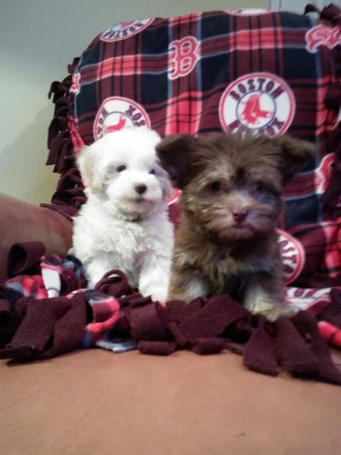 Fenny & Brady