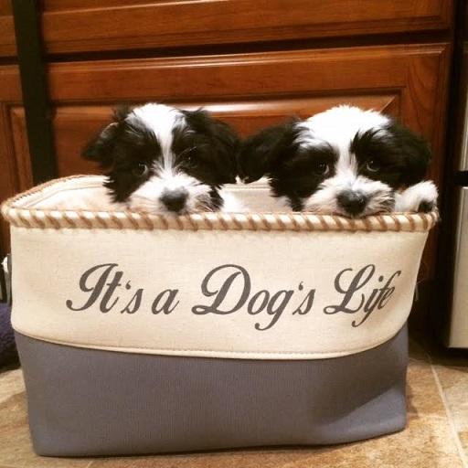 Cooper & Bailey