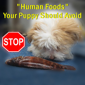 """Human Foods"" Your Puppy Should Avoid"