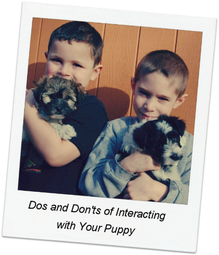 Dos and Don'ts of Interacting with your Puppy