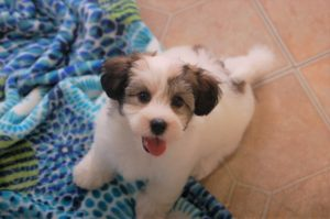 tips for taking your new puppy home